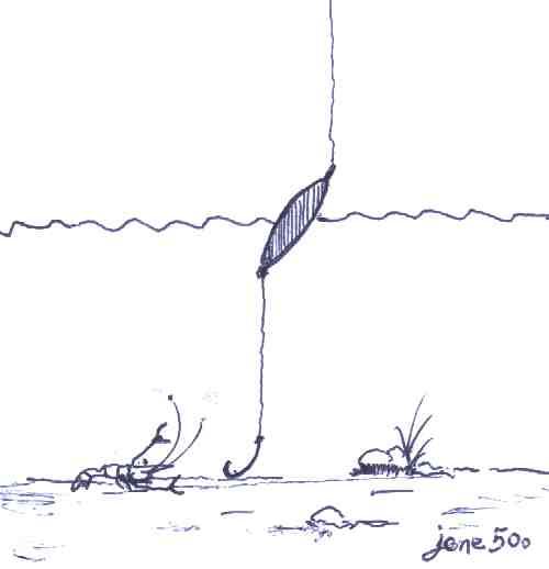 เทคนิคการตกกุ้งตามบ่อ