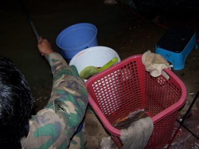 เพิ่มเติมวิธีการตกปลากดด้วยเหยื่อหมักหอมกับ yongf