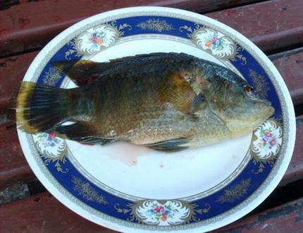 แพนันทนา ตกปลาเขื่อนศรีนครินทร์ กาญจนบุรี