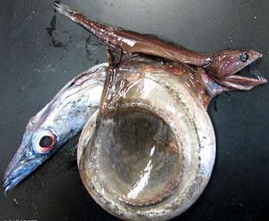 ปลาเล็กกินปลาใหญ่