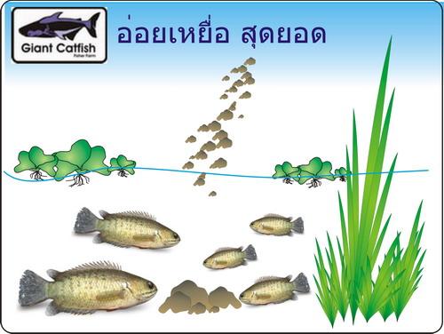 ตกปลาหมอข้างทาง