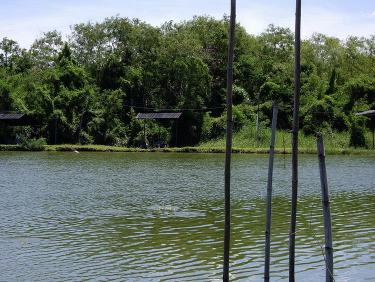 ตกปลาบ่อในอ้อมกอดธรรมชาติ