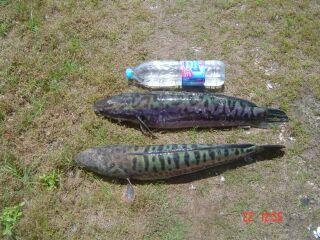 แผ่นที่อ่างเก็บน้ำ ดอกกราย และ หนองปลาไหล จ.ระยอง