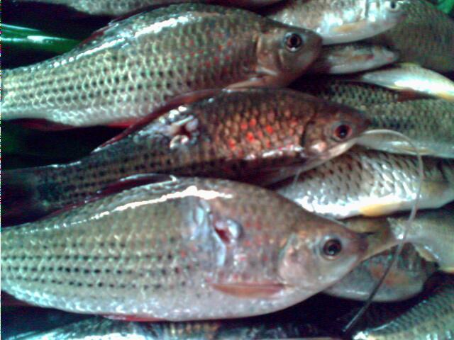 ดำยิงปลาที่แม่น้ำวัง