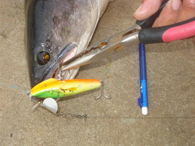 ใครชอบ ปลาชะโดมาดูที่บ่อนิมิตรใหม่