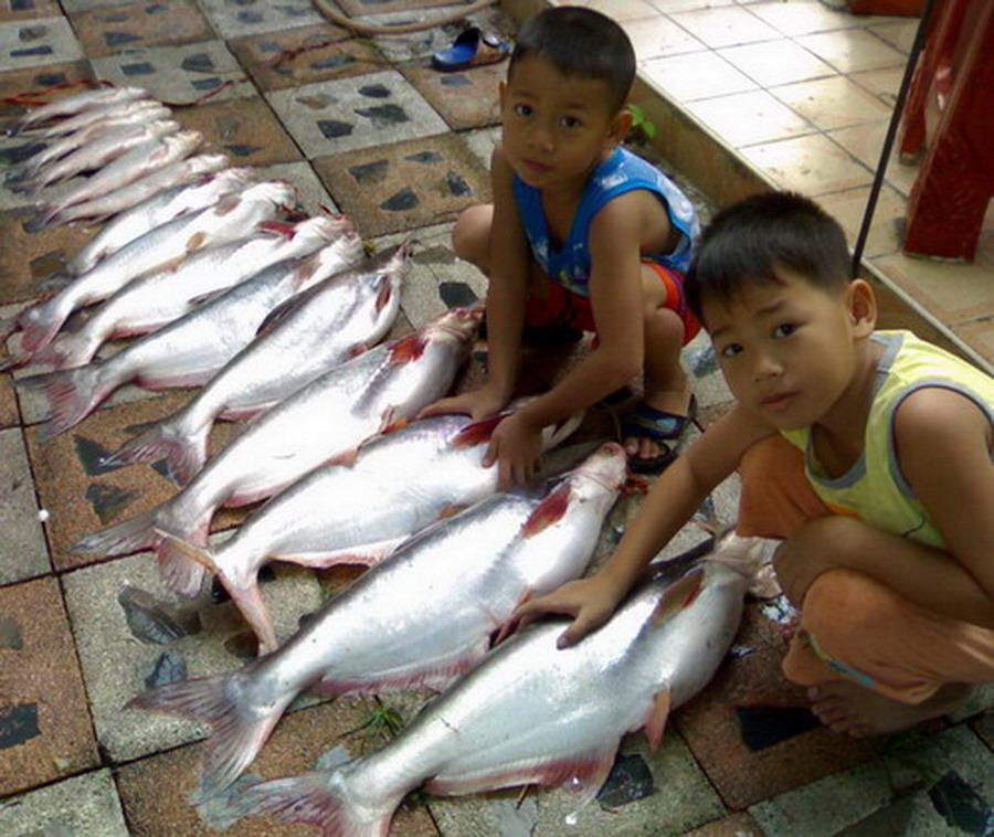 ช่วยแนะนำแหล่งรับซื้อปลาแม่น้ำ(ปลาสวาย)