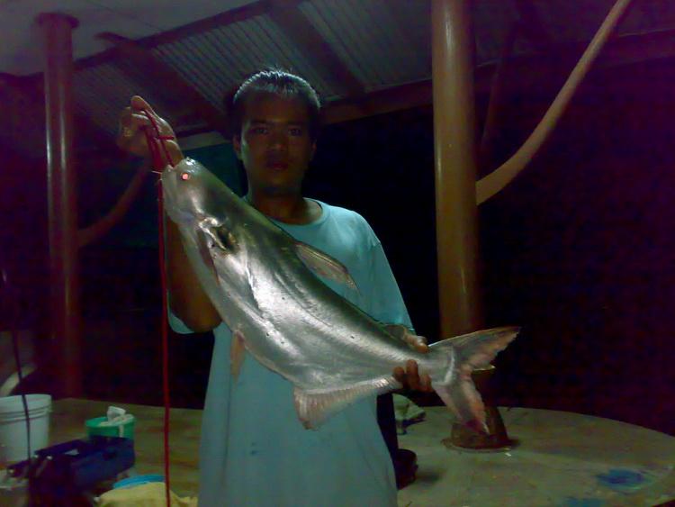 ปลาเทโพเเม่น้ำน้อย จังหวัดอ่างทอง