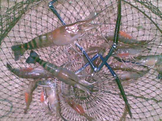 แพตกปลาลุงเจี๊ยบบางไทร  ( ลานเท )