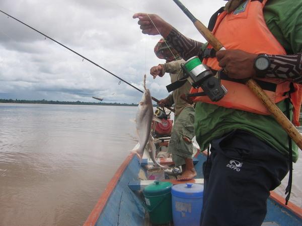 ตกปลาแม่น้ำโขง