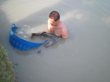 ไปดูเขาปล่อยปลามา (อเมซอล)