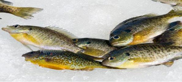 10 อันดับ ปลาที่นิยมตกเป็นกีฬา