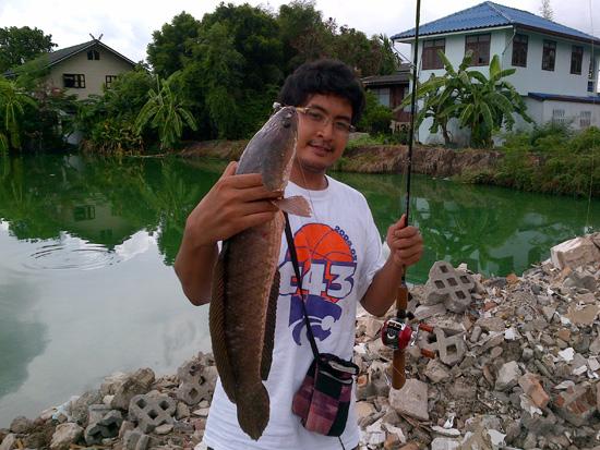 ปลารวมๆในรอบอาทิตย์