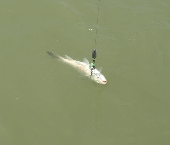 ตกปลาแม่น้ำ