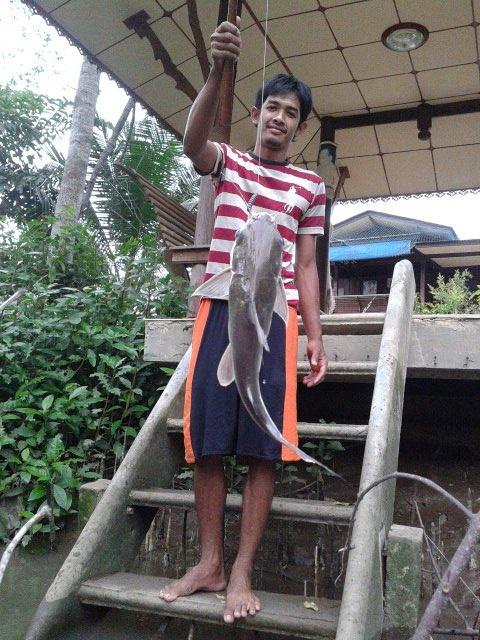 ปลาฮิเข้าฮิออก คลองอัมพวา