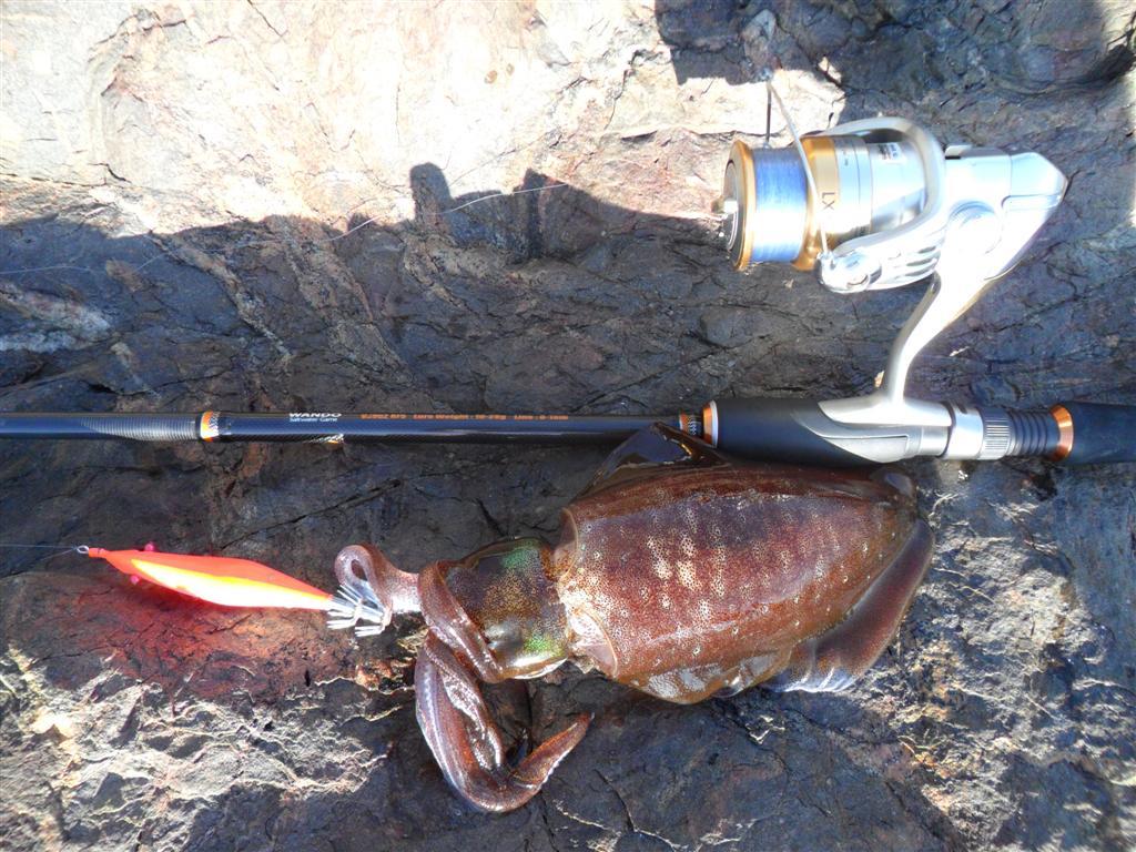 เทคนิคตกปลาหมึกชายฝั่ง หน้าหาด