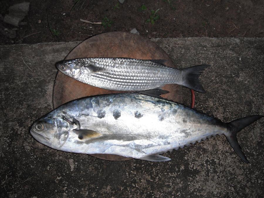 ปลาทอด ปลาต้ม ปลานึ่ง
