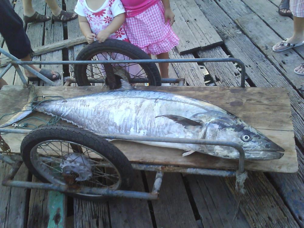 คิดถึงตกปลาอินทรี...