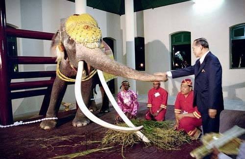 ... เหรียญสมโภชช้างเผือก จ.เพชรบุรี 2521 ...