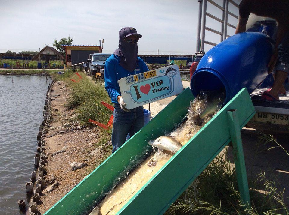 VIP Fishing กะพงแดง เก๋า กะพงขาว มาแล้วครัช