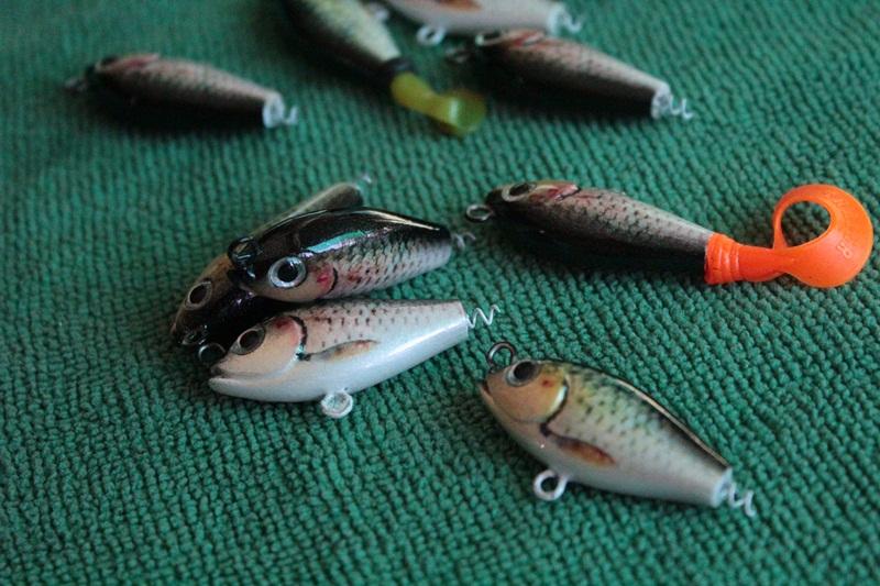 ปลาซิวปลาสร้อย