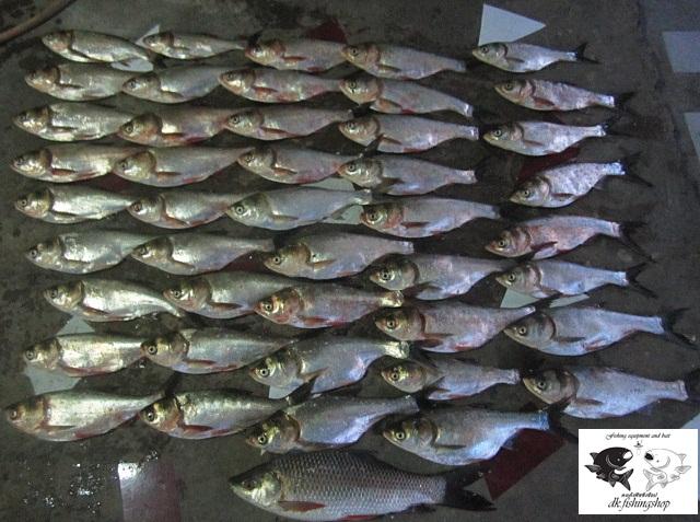 ตามคำขอครับ เหยื่อปลาจีนสูตร 50ล้าน