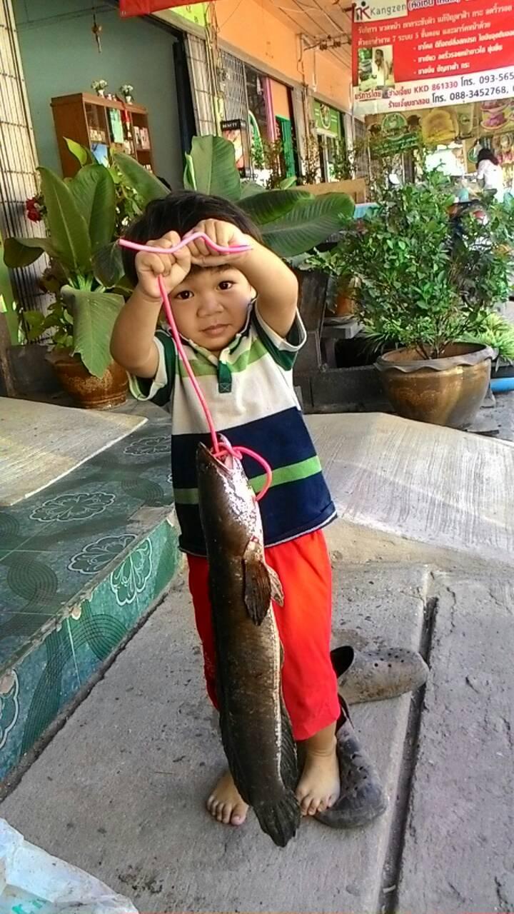 ปลาช่อนไซร์ สวยๆๆๆ