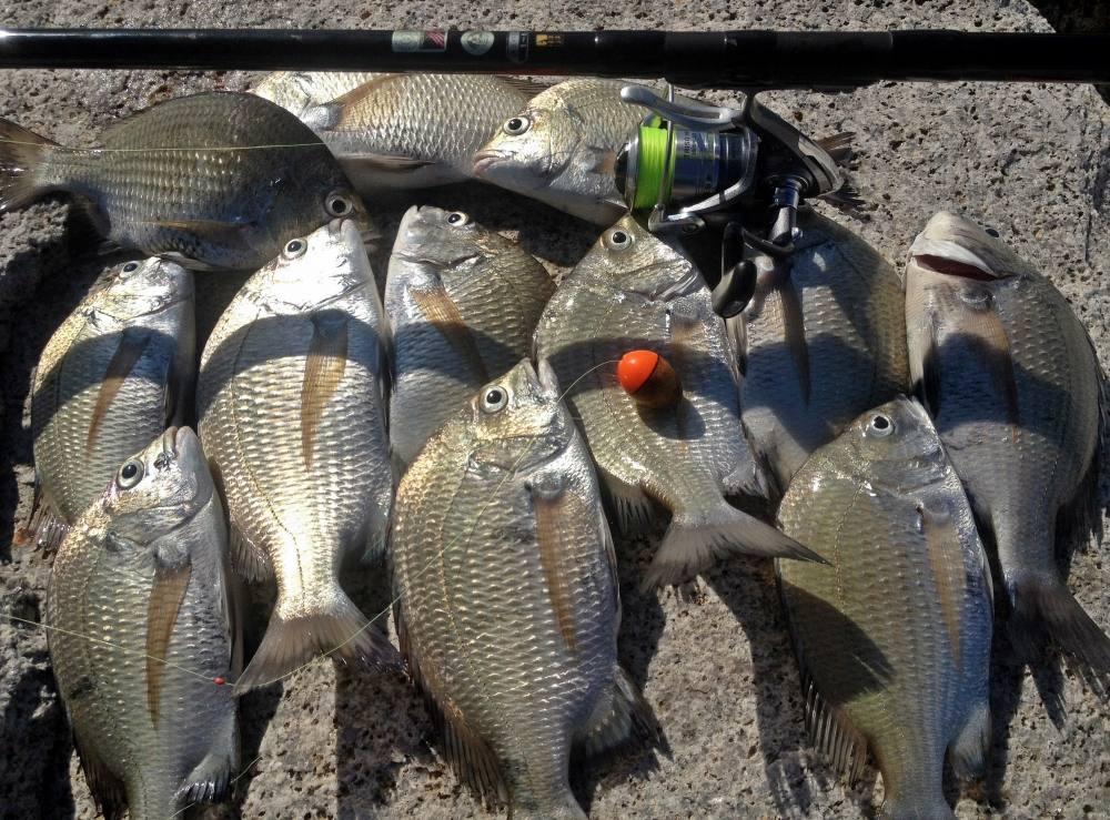 เกมส์เบาๆกับสายสายเล็กๆ Iso Fishing