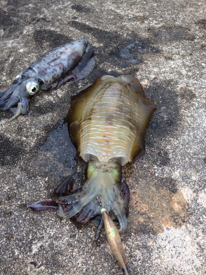 43 ตัว พอได้ประทังชีวิตคราฟ ที่ เกาะพิทักษ์ อ.หลังสวน จ.ชุมพร