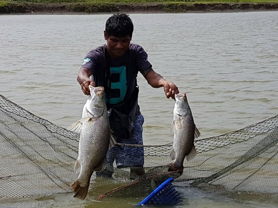 ทริปกะพงวังดำ บางปะกง ปลาเกือบ500โล+รางวัลมูลค่า10,000บาทค่าตก1,200บาท รับ45คน