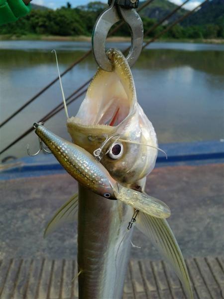 ปลาเบี้ยว 21