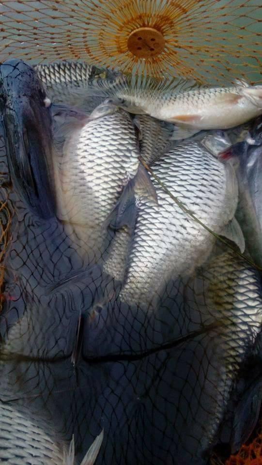 เปิดใหม่ บ่อซิง ตกปลาเกล็ด หน้าดิน  ปลาเป็นตัน ค่าคัน 350 เปิดตก เสาร์ที่ 15ก.ค