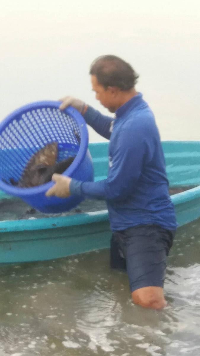 ♡♡ปลาหมอเลผสม ปะทะ เก๋าซ่า ณ วังกระพงน้าตุ๊(เสาร์30กันยา)เจอกัน