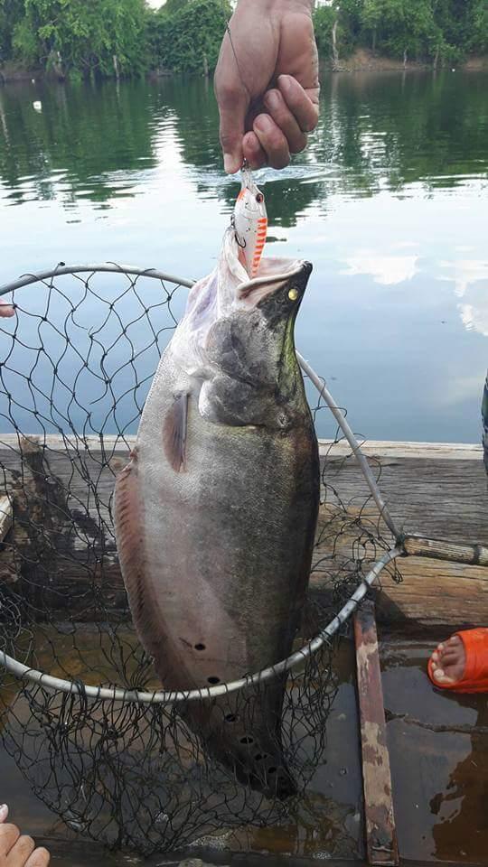 ตกปลากระสูบลำน้ำก่ำภาค3