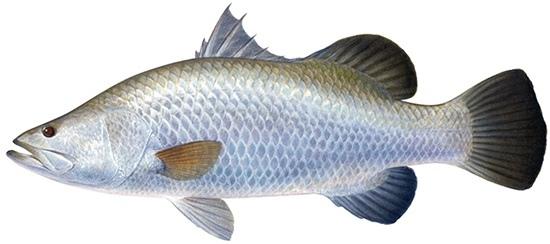 แนะนำเหยื่อปลอมตกปลากะพงวังกุ้งวังหอยหน่อยครับ