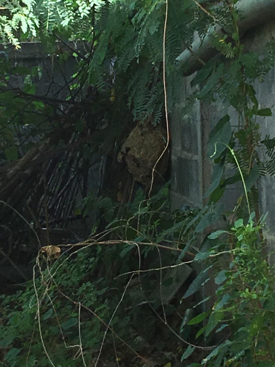 ครั้งที่ 2 ในการเอาต่อหัวเสือ มาทำเมนูเด็ด