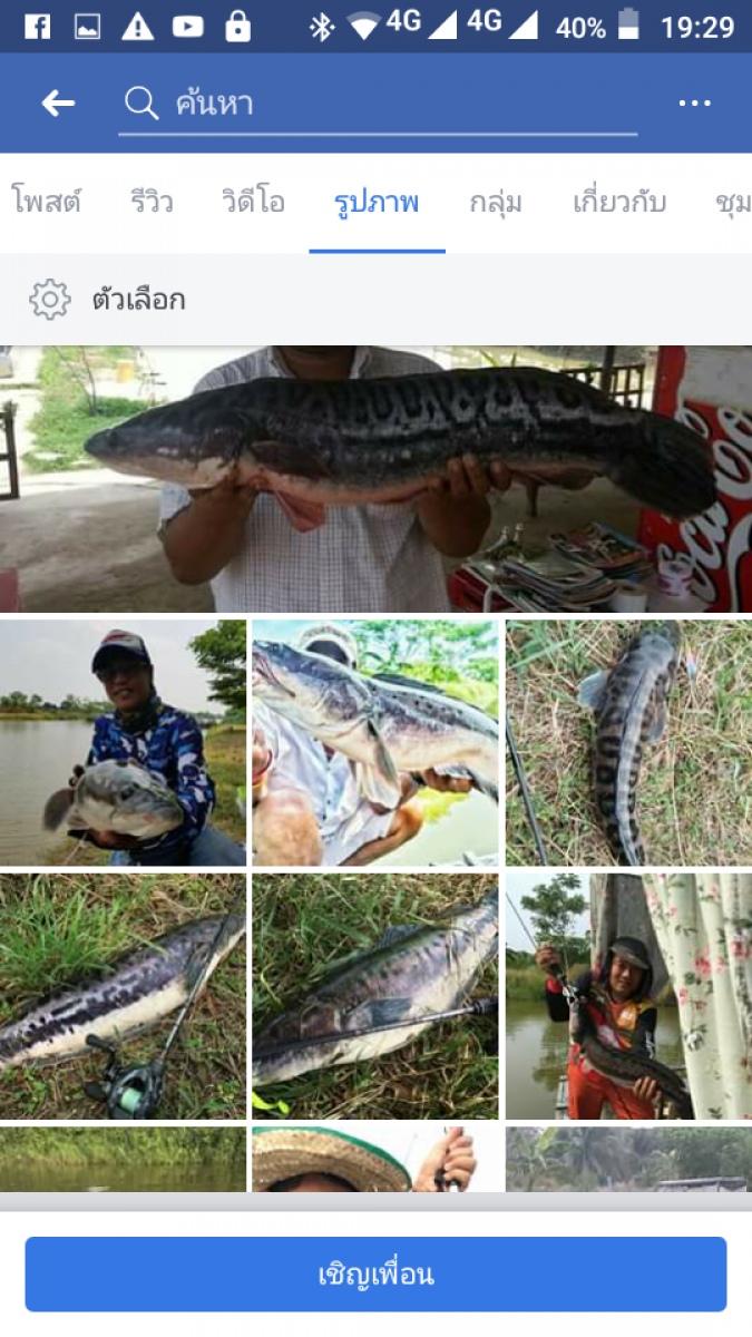 nirvanafishingpark snakehead thailand