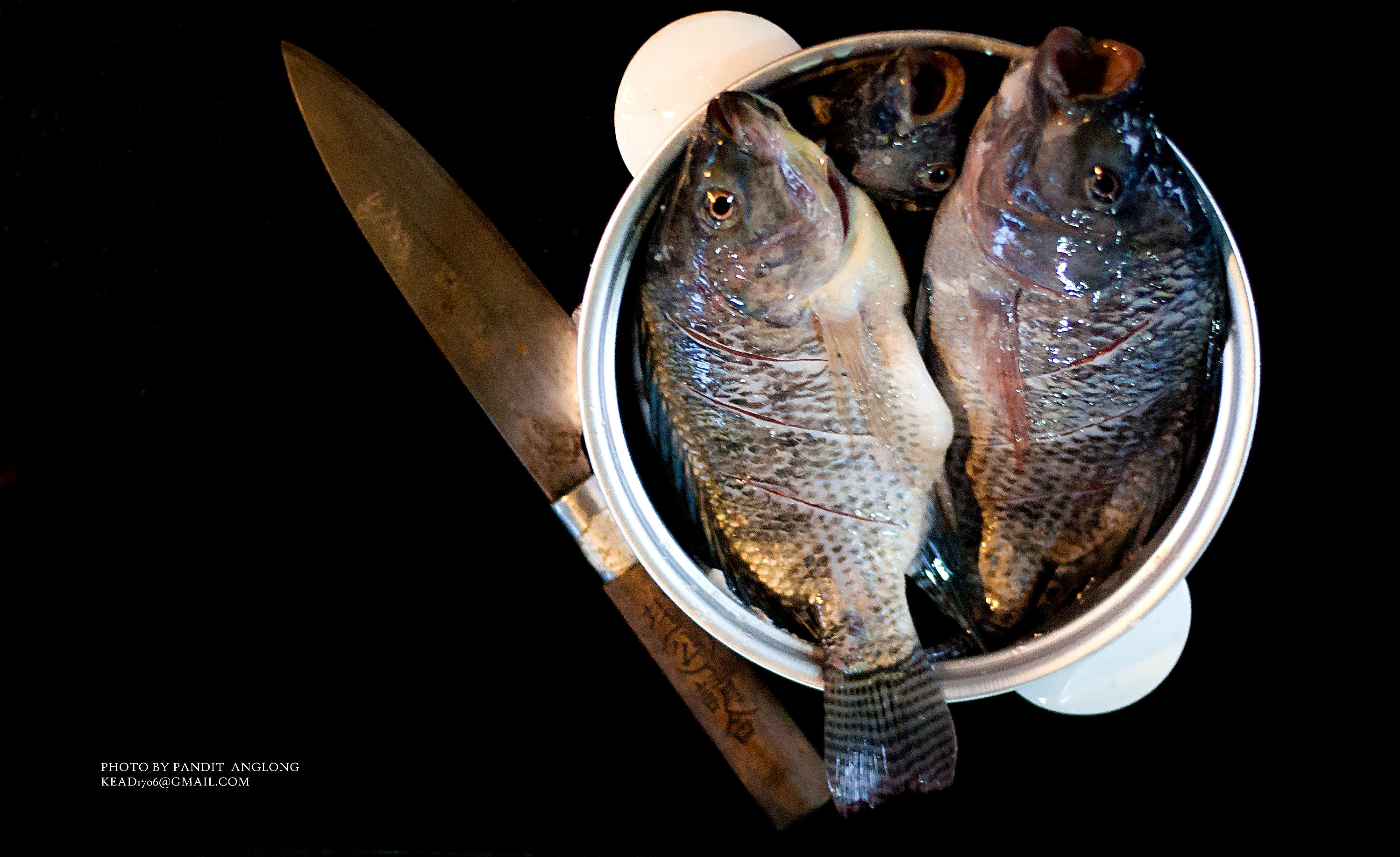 ปลาท้องนา