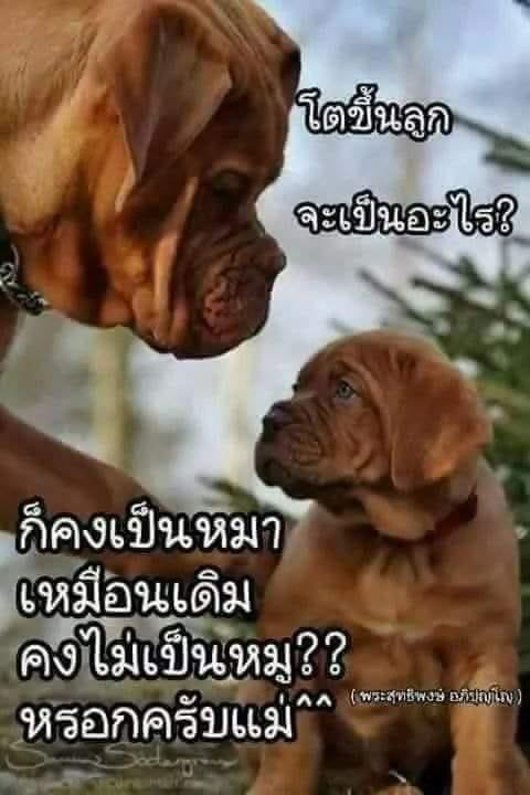++ ทะเลาะกันเพื่ออะไร...? ++